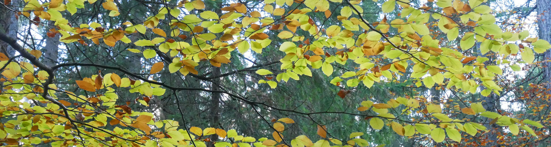 Eibsee Wald Herbst