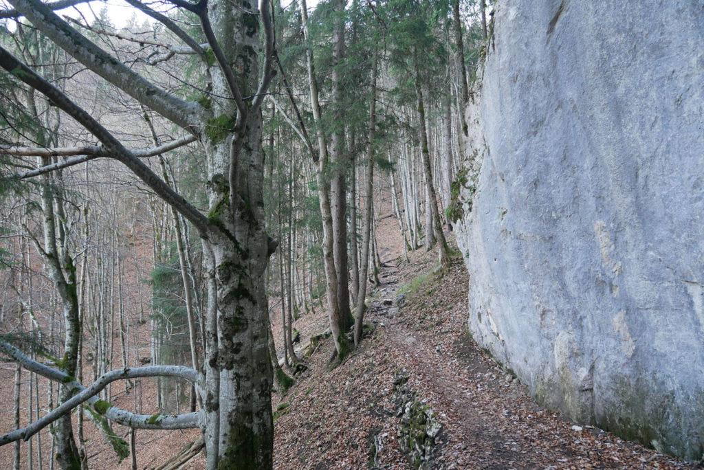 Kofel Aufstieg Wald