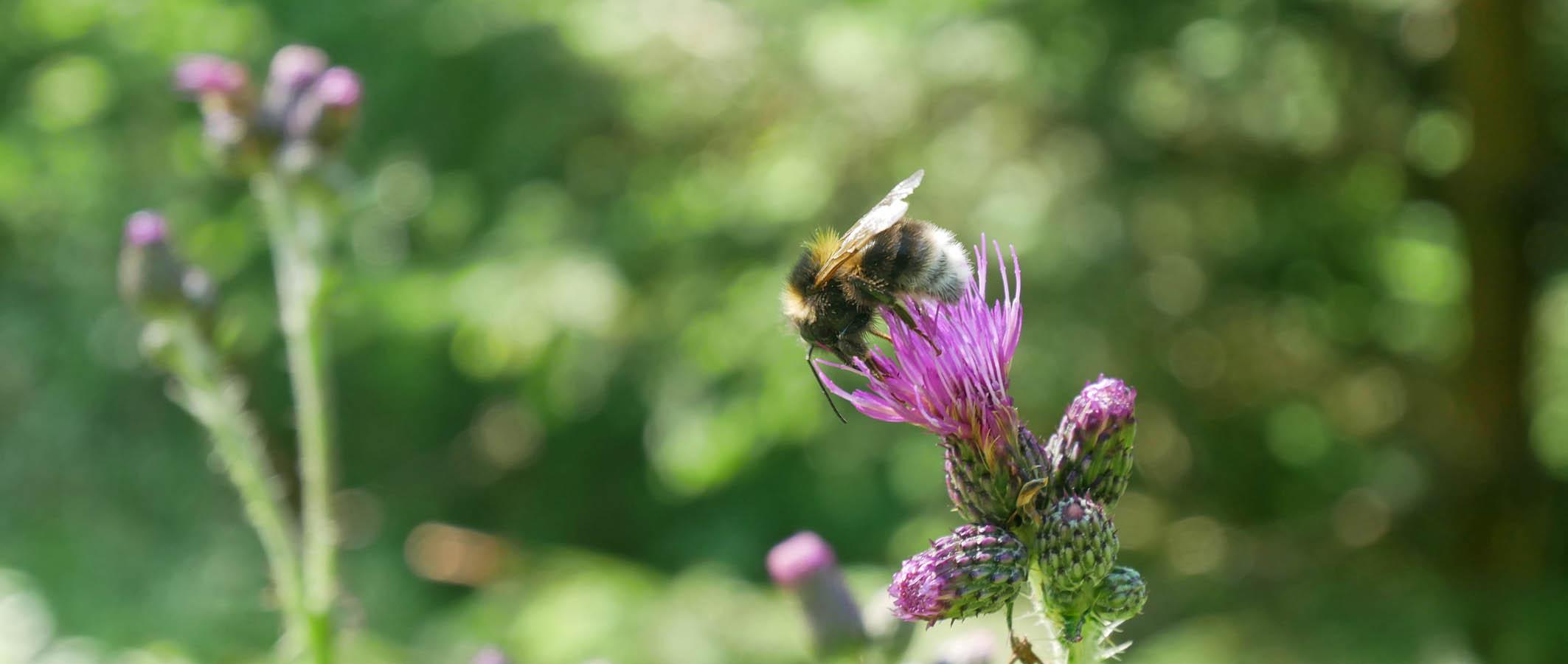 Eckenhütte Natur Biene
