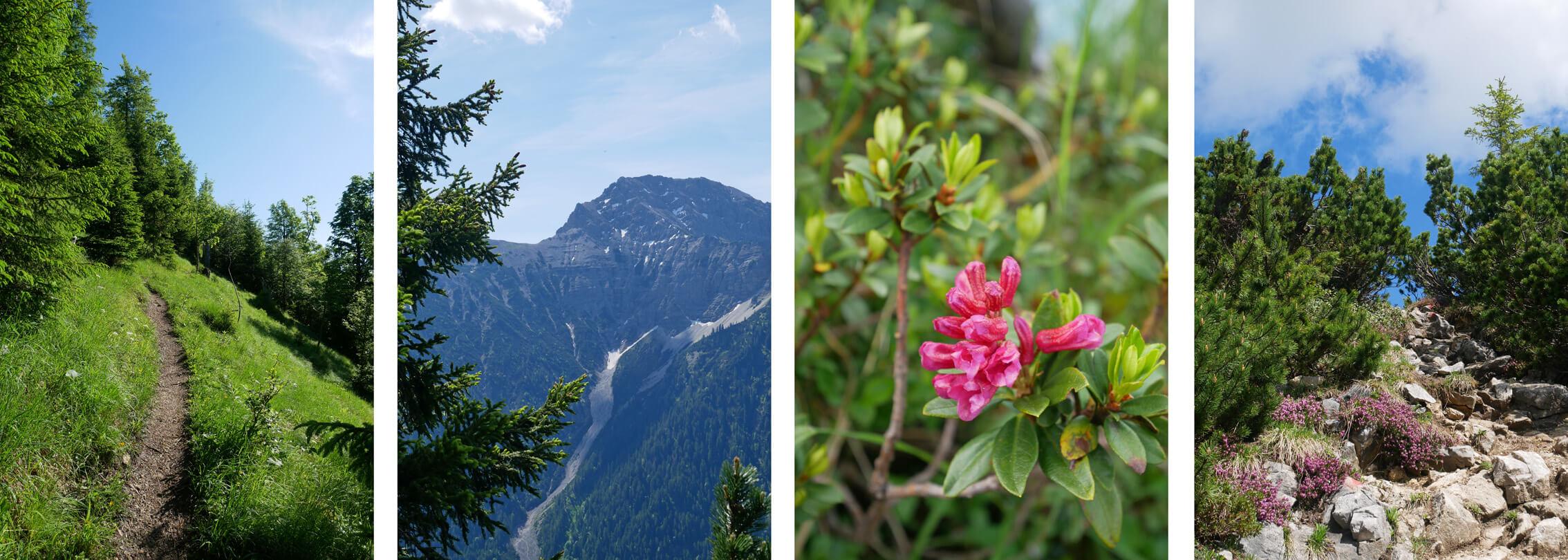 Scheinbergspitze Wanderung