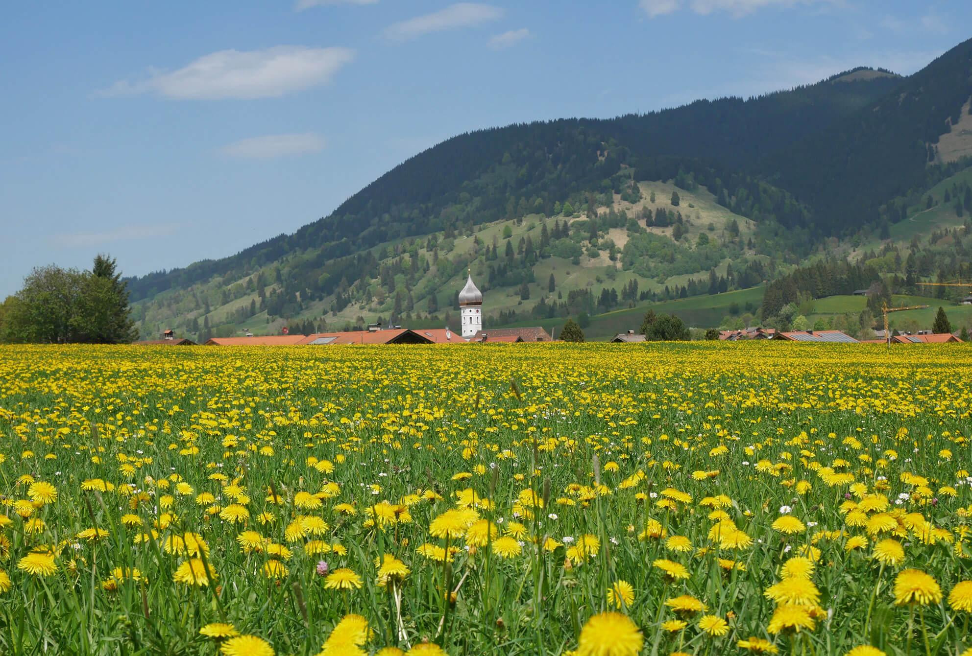 Unterammergau Blumenwiese