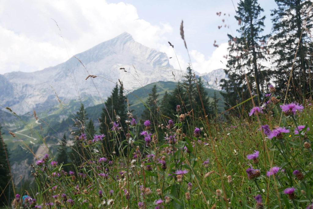 Alpspitze Sommerblumen