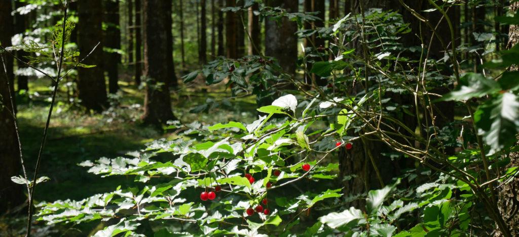 Barmsee Rundweg Wald