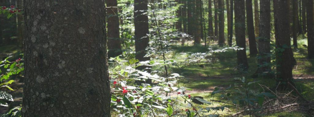 Barmsee Waldweg Rundweg