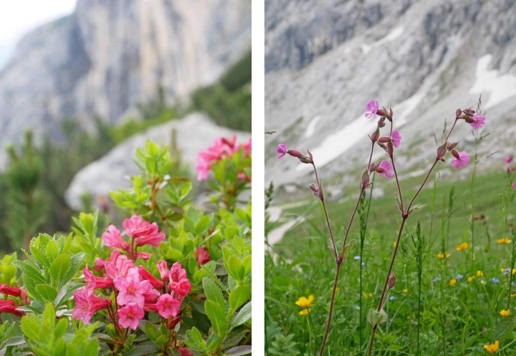 Bergblumen Osterfelderkopf