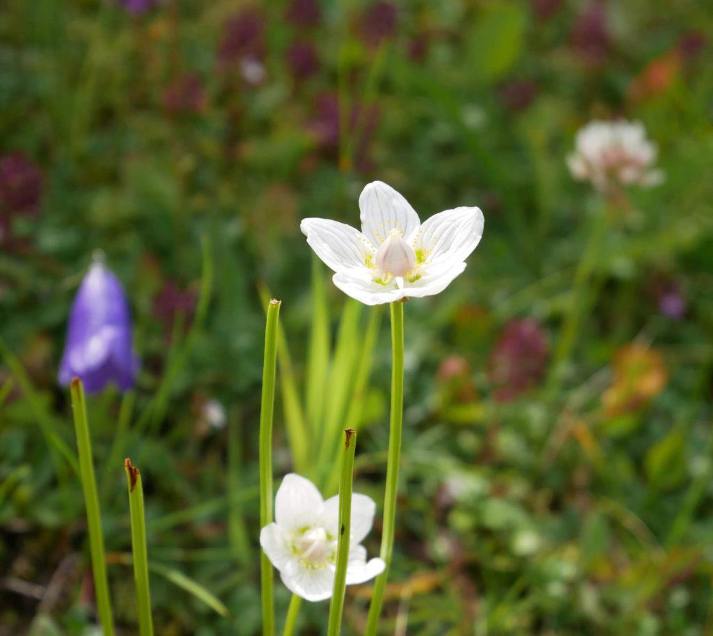 Garmisch Classic Blumen