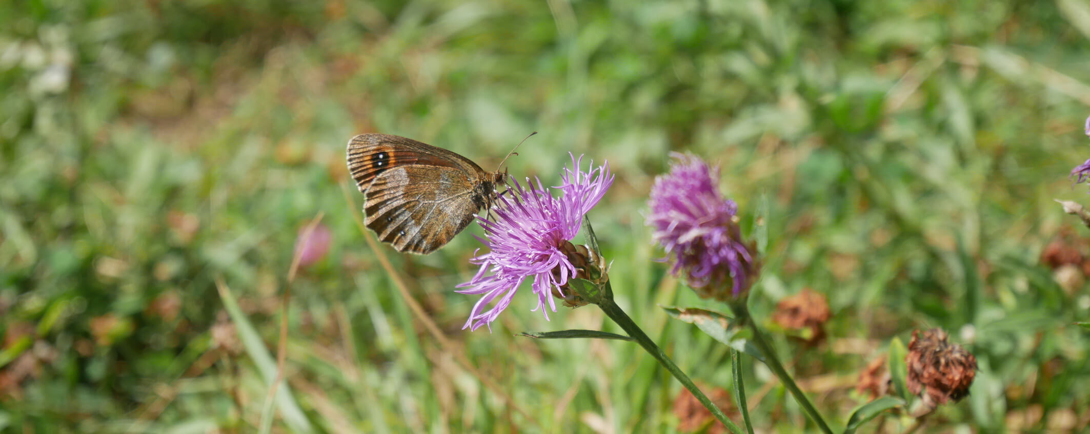 Loisachblick Schmetterling