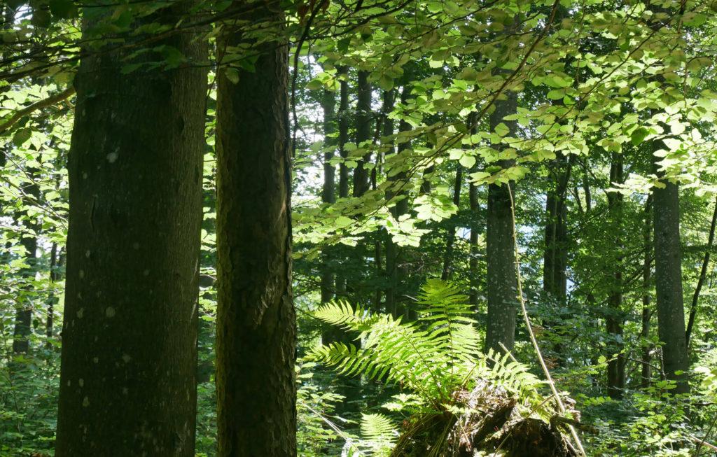 Loisachblick Wald