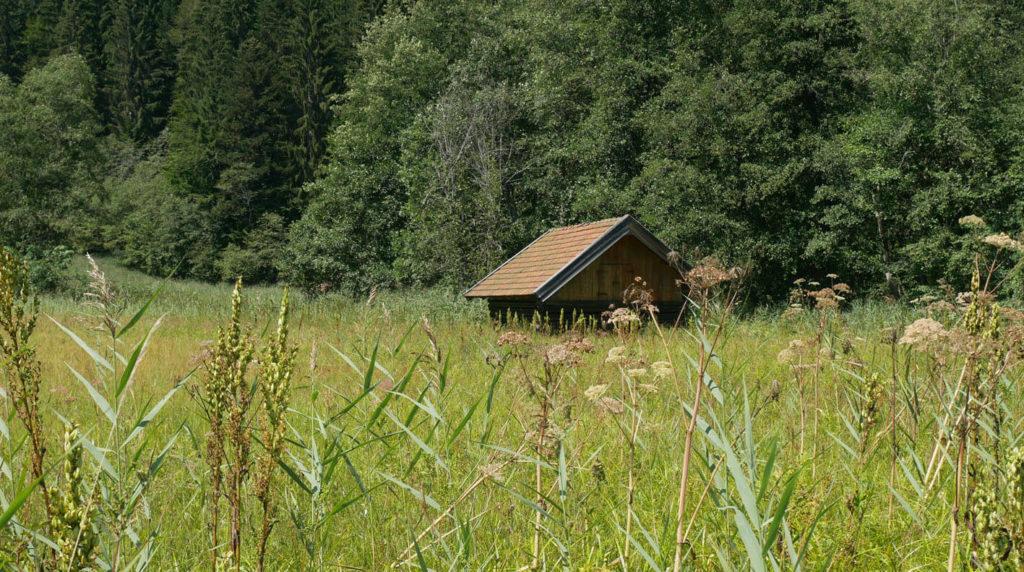 Natur Karwendel Barmsee(1)