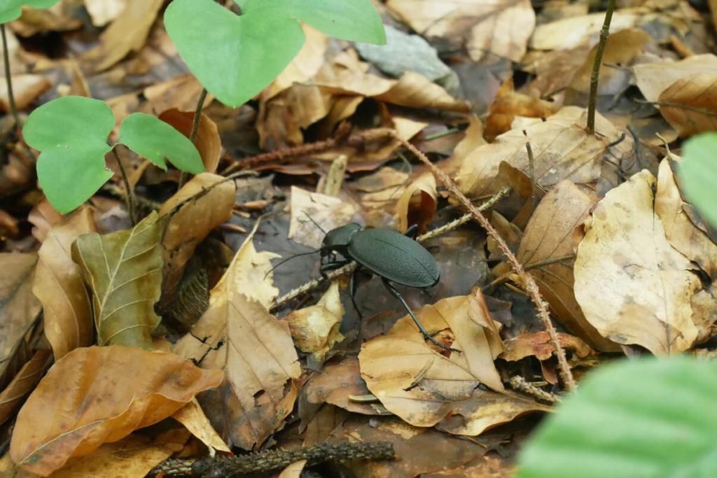 Kirchbichlrundweg Käfer