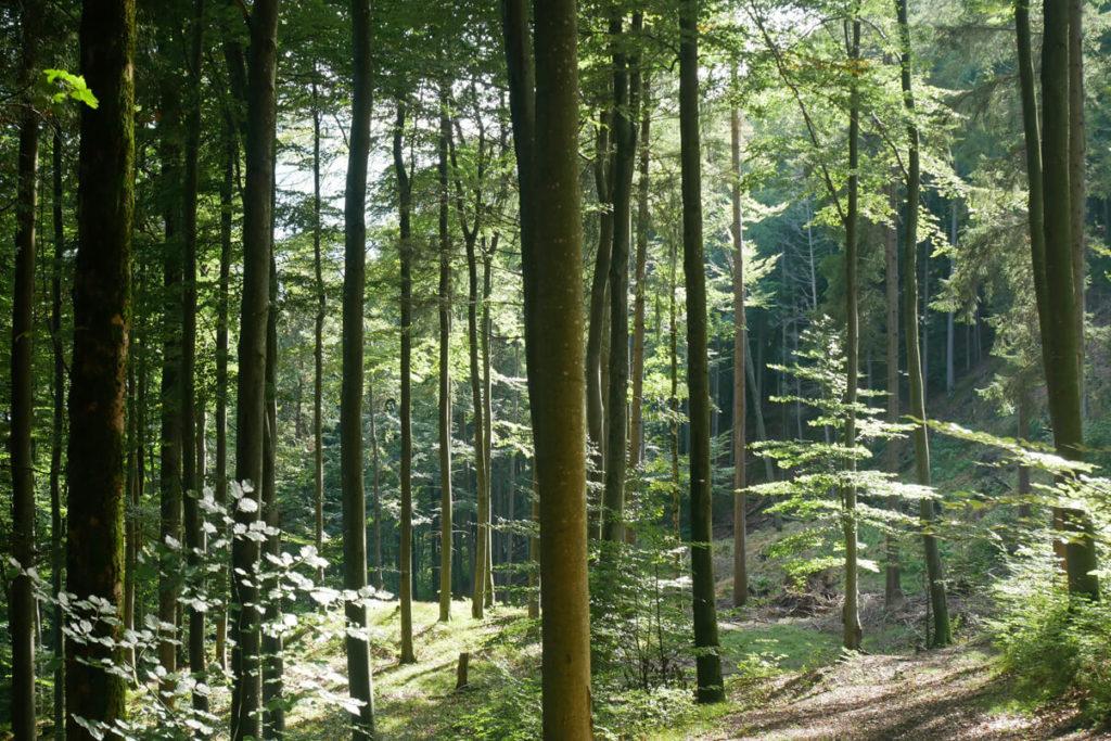 Kirchbichlrundweg Wald