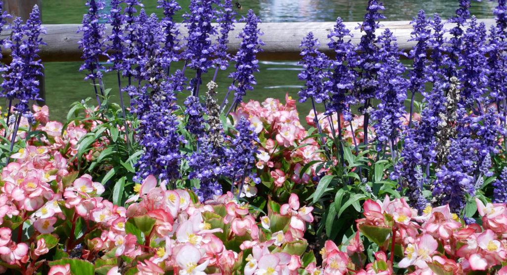 Oberauer Schwimmbad Blumen