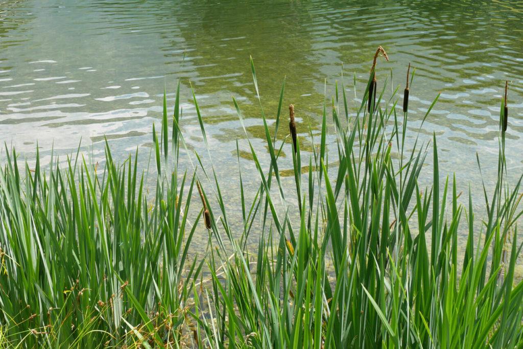 Schwimmbad Oberau Bepflanzung