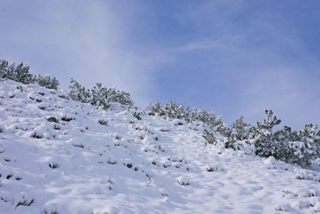 Wank Schnee Latschenfelder