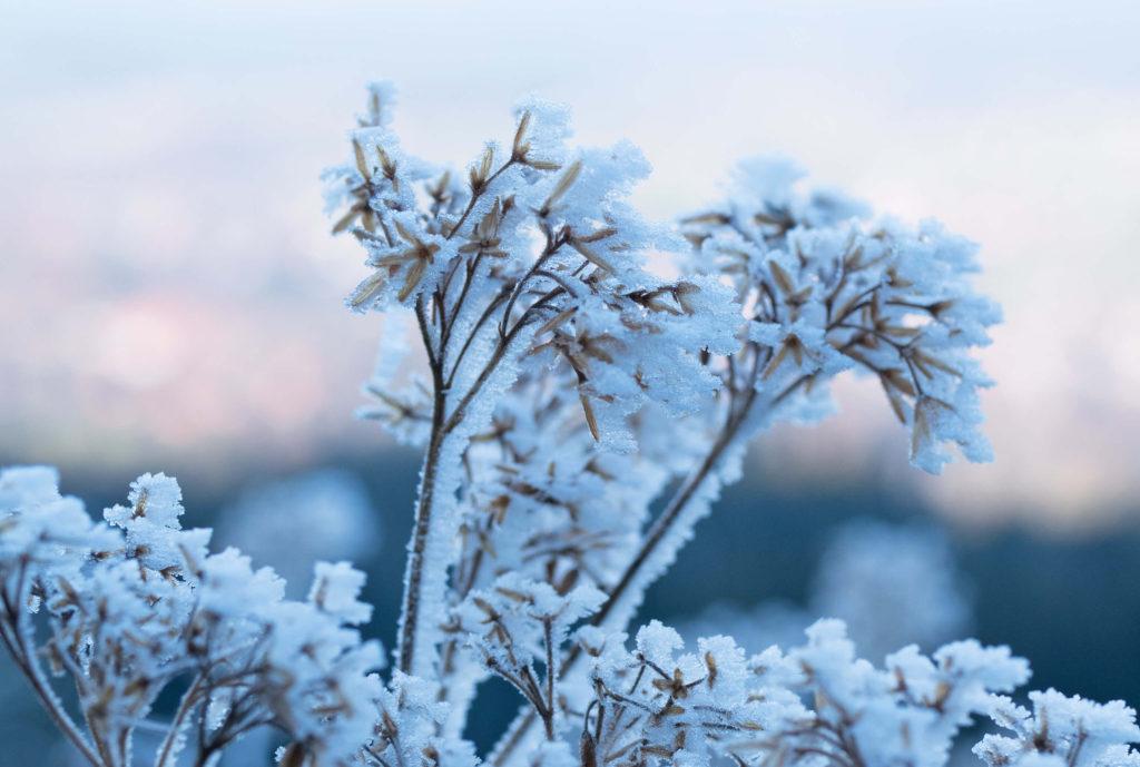 Hörnle Frost