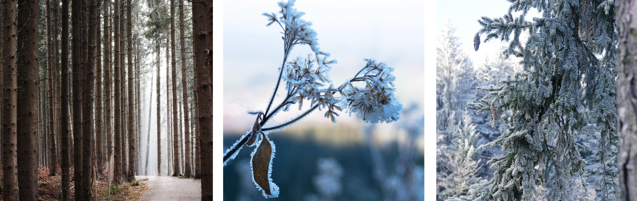 Hörnle Frost Natur