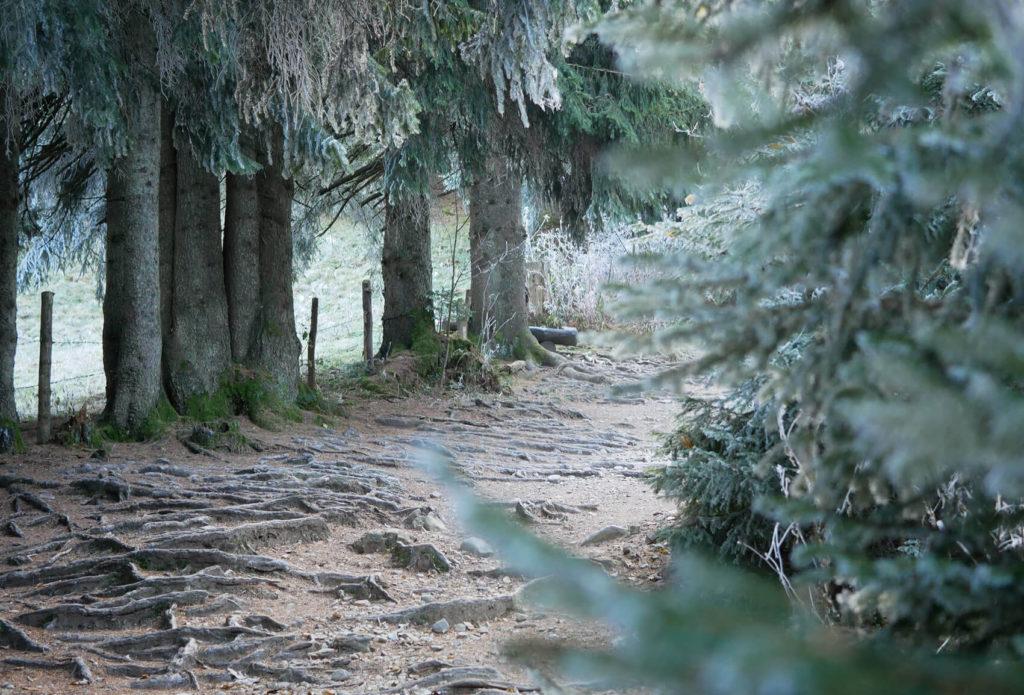 Hörnle Wald Wanderung