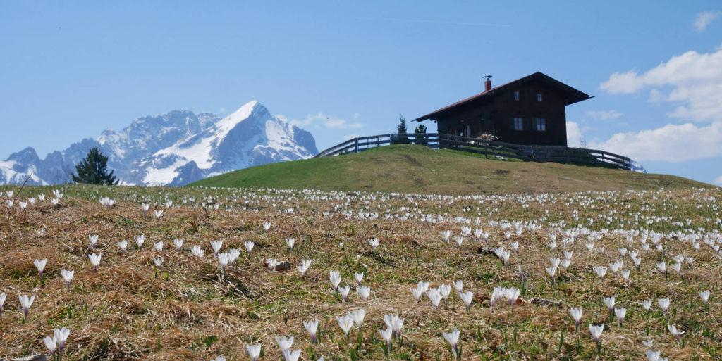 eckbauer frühling alpspitze
