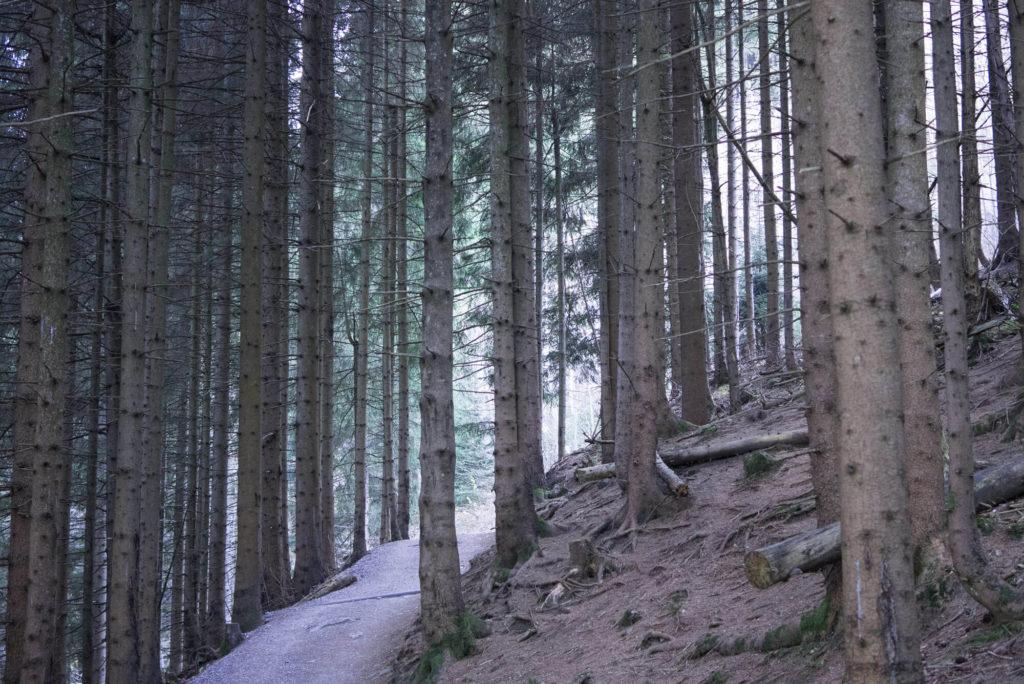 hörnle Wanderung wald