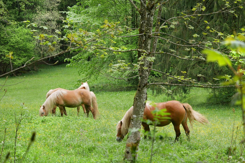 kolbensattel wanderung pferde