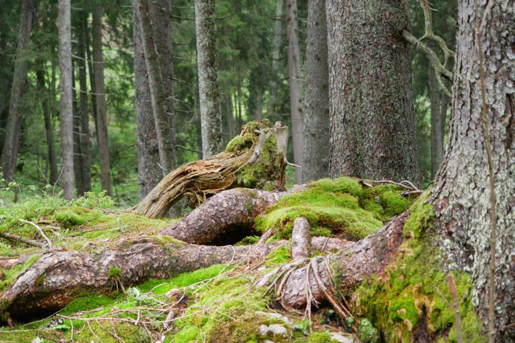 kolbensattelhütte wanderweg